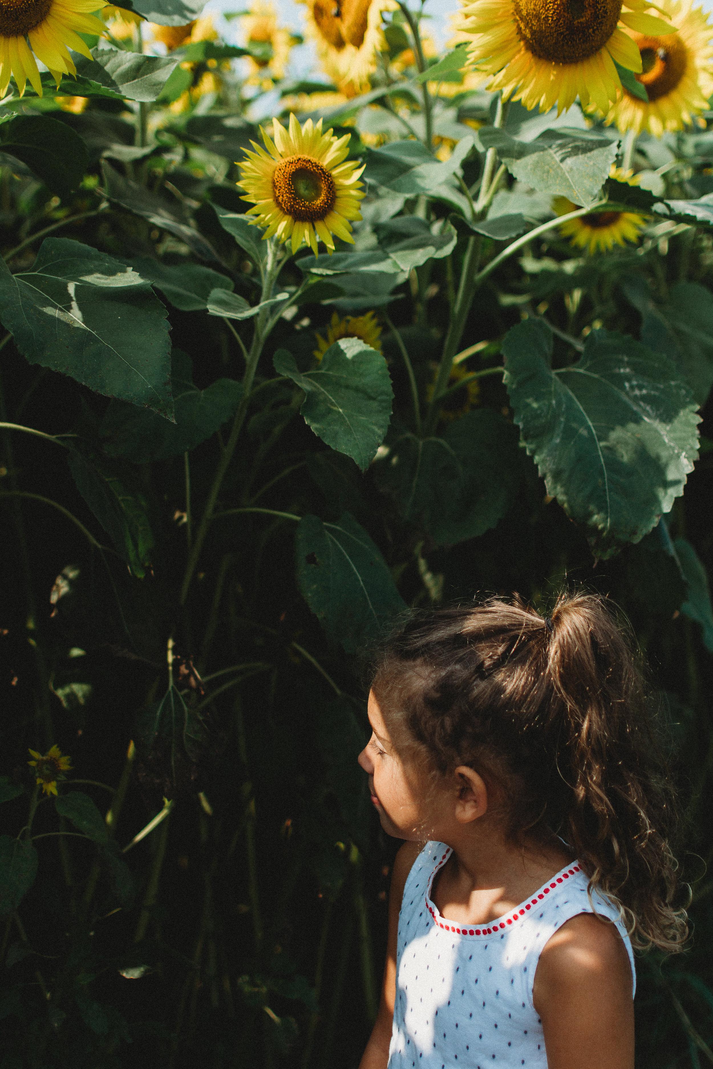 Colby Farm Sunflowers (24 of 58).jpg