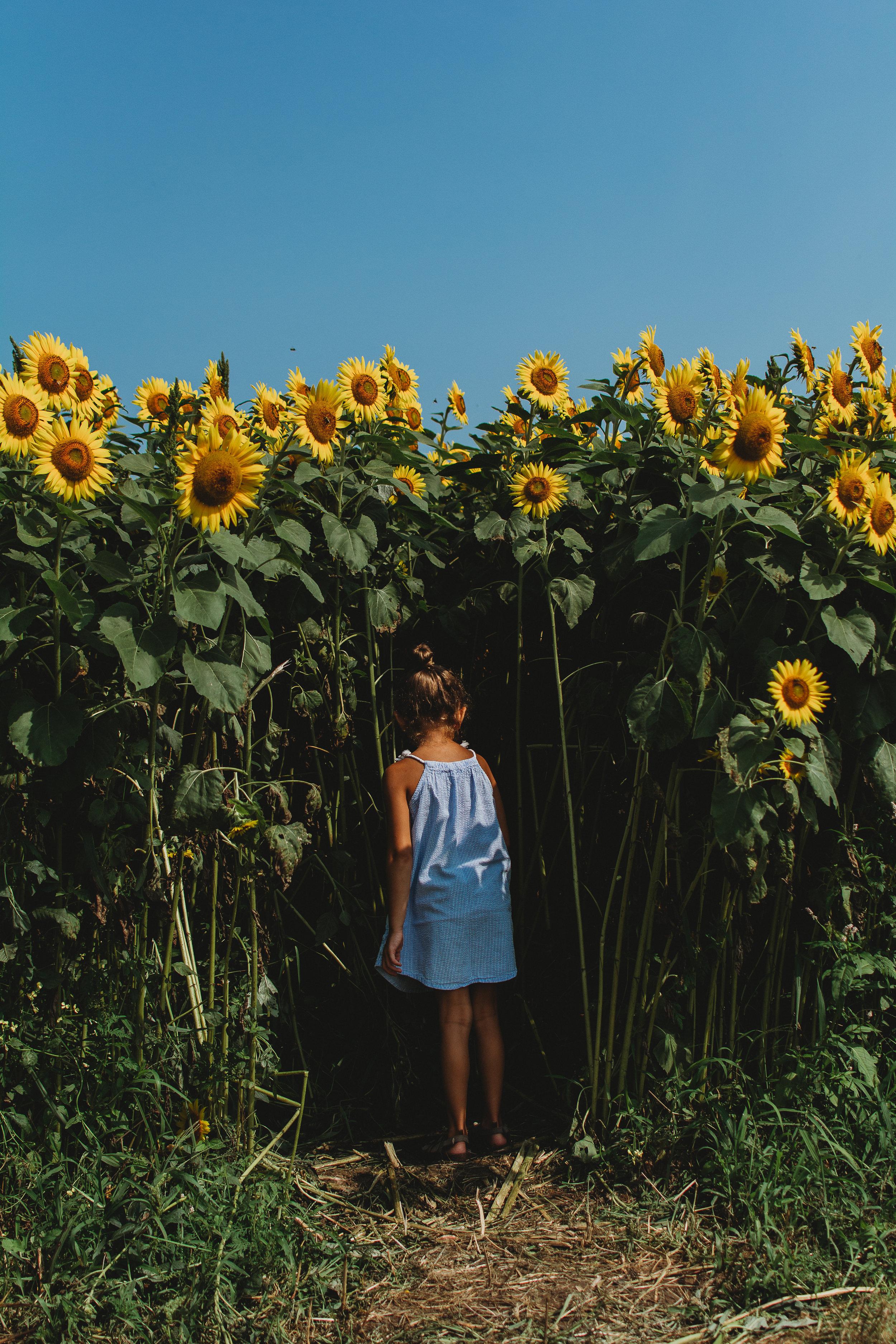 Colby Farm Sunflowers (40 of 58).jpg