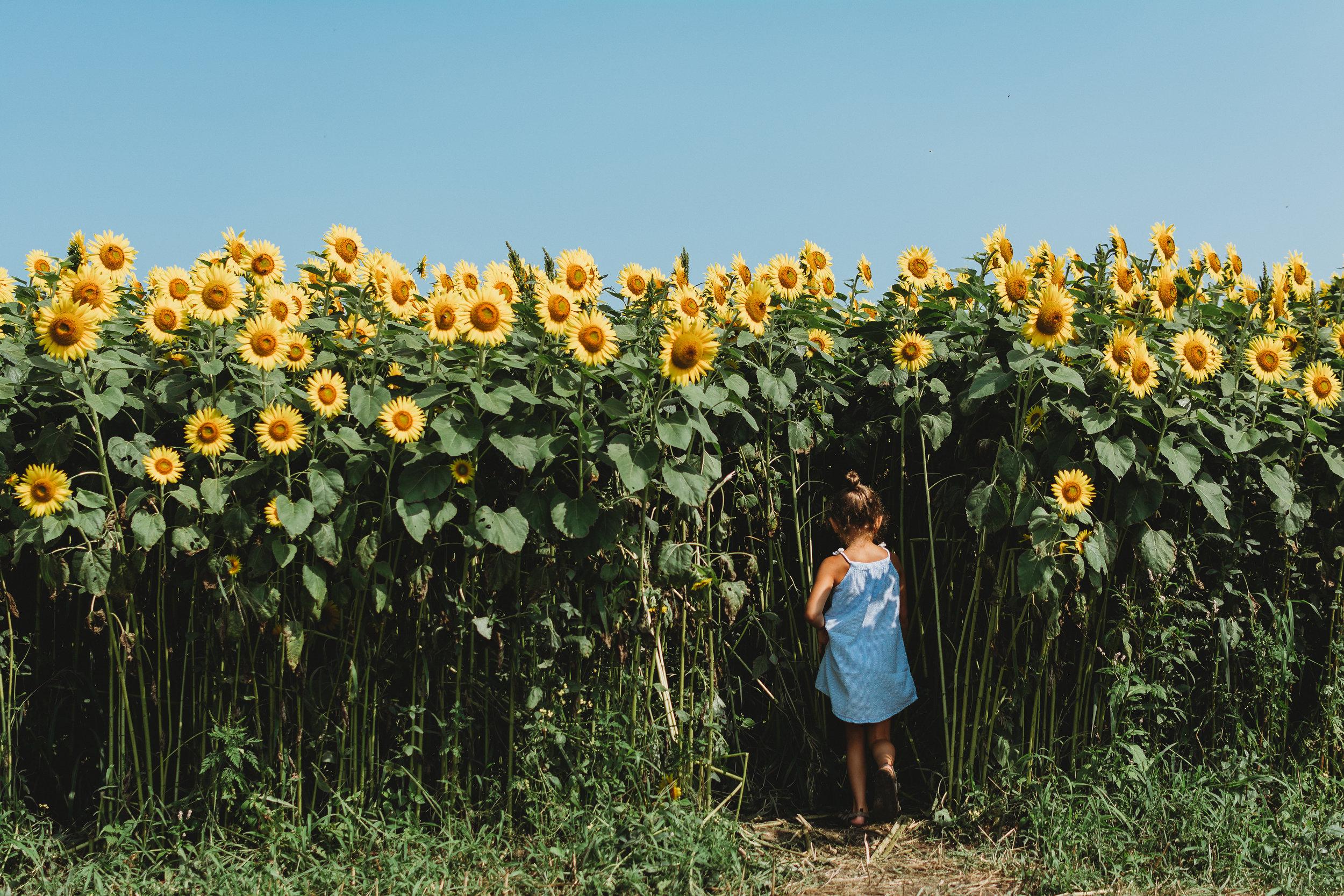 Colby Farm Sunflowers (44 of 58).jpg