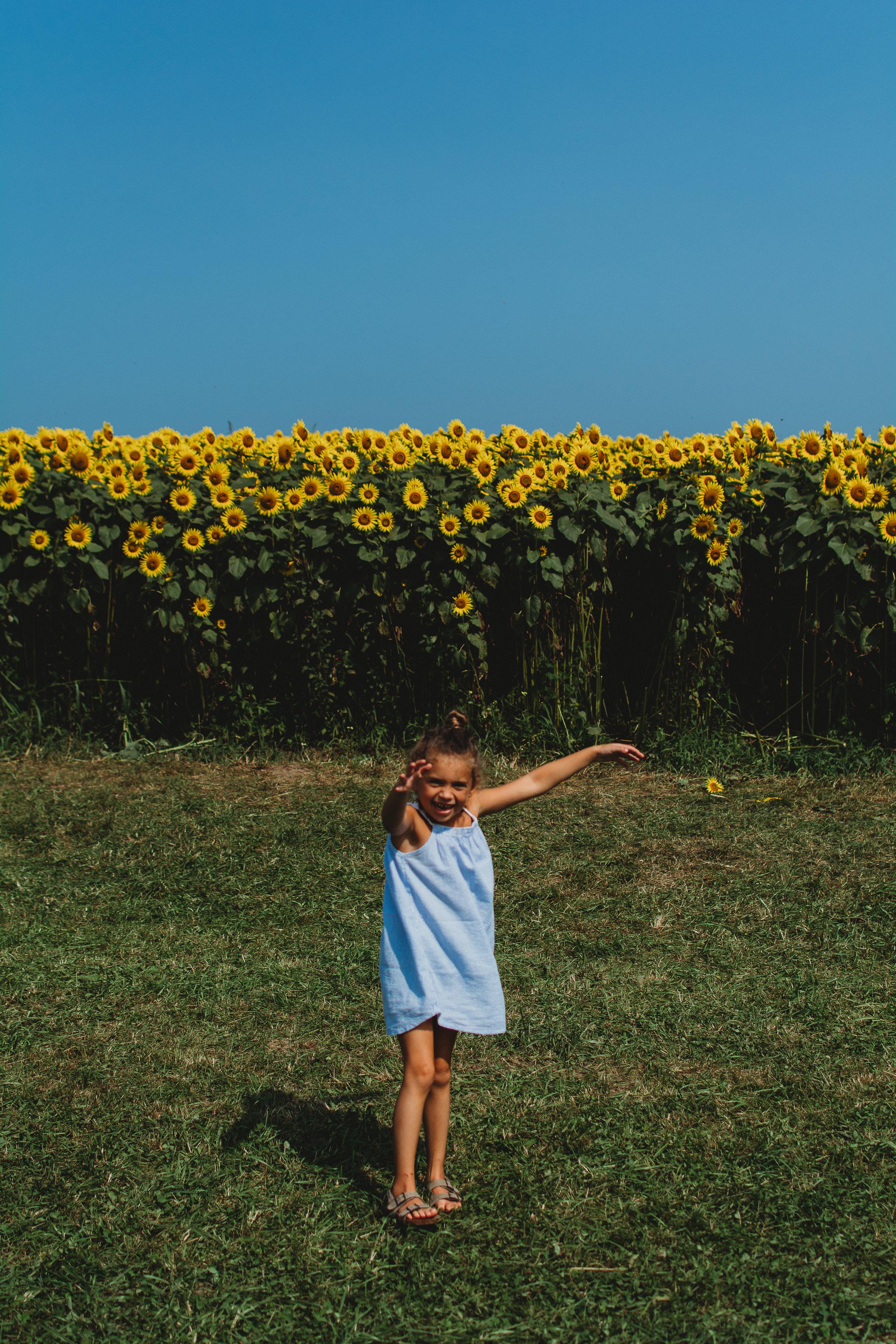 Colby Farm Sunflowers (58 of 58).jpg