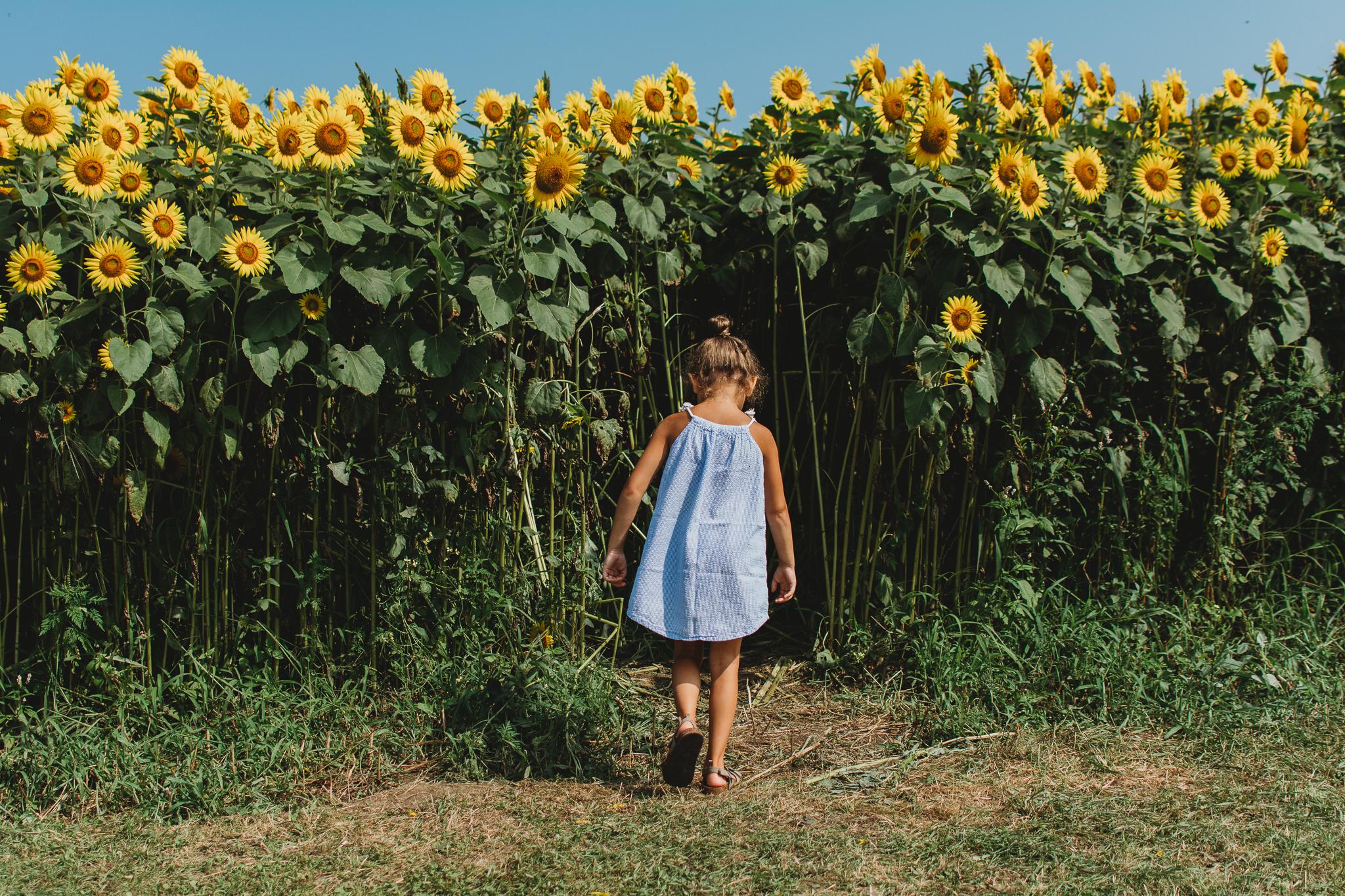 Colby Farm Sunflowers-9737.jpg
