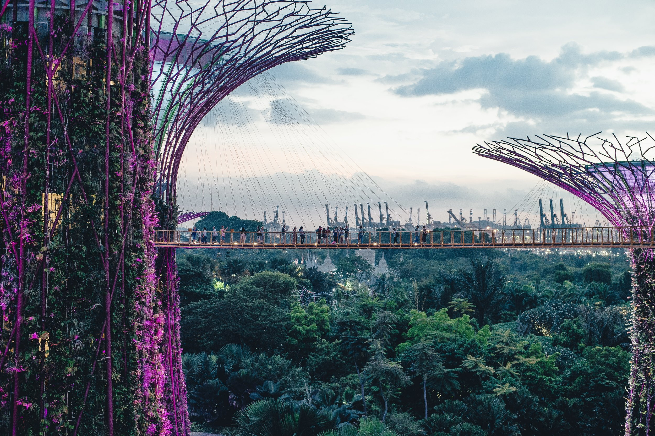 Singapore's tech scene is really blooming. Photo credit: Annie Spratt