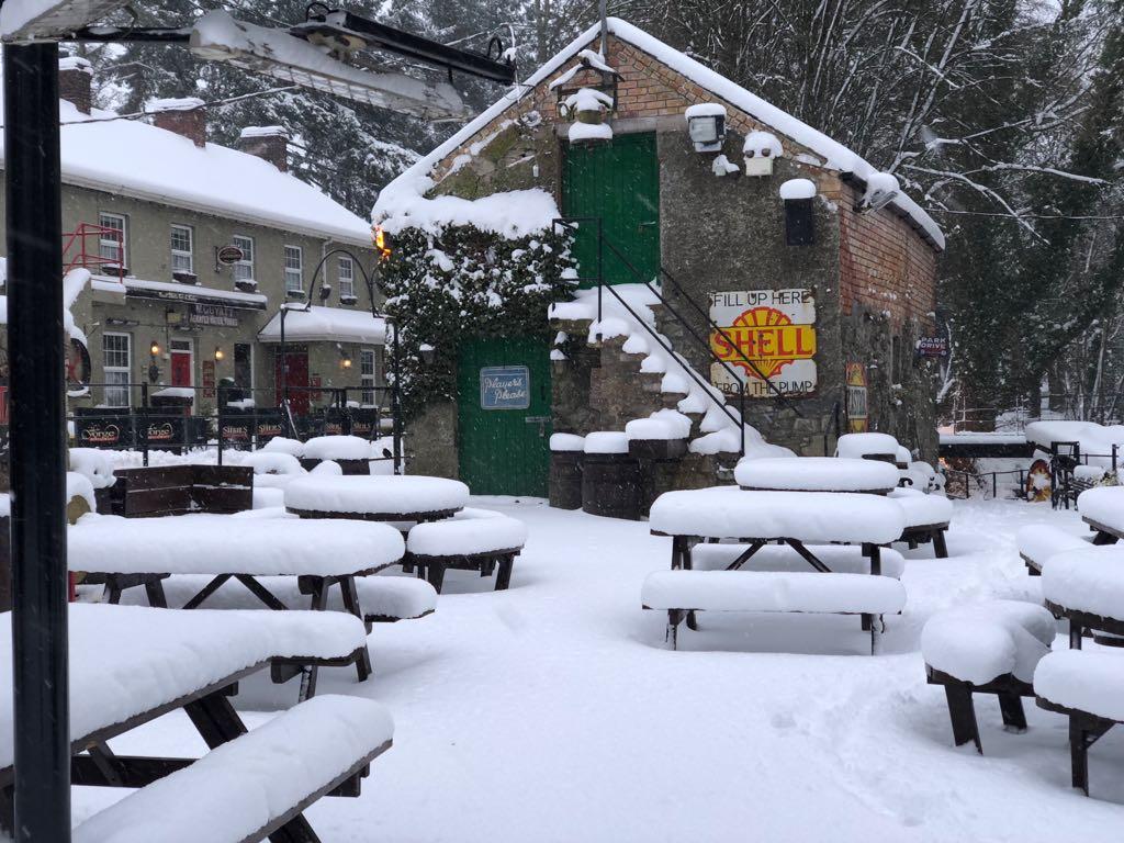 basil in snow.jpeg
