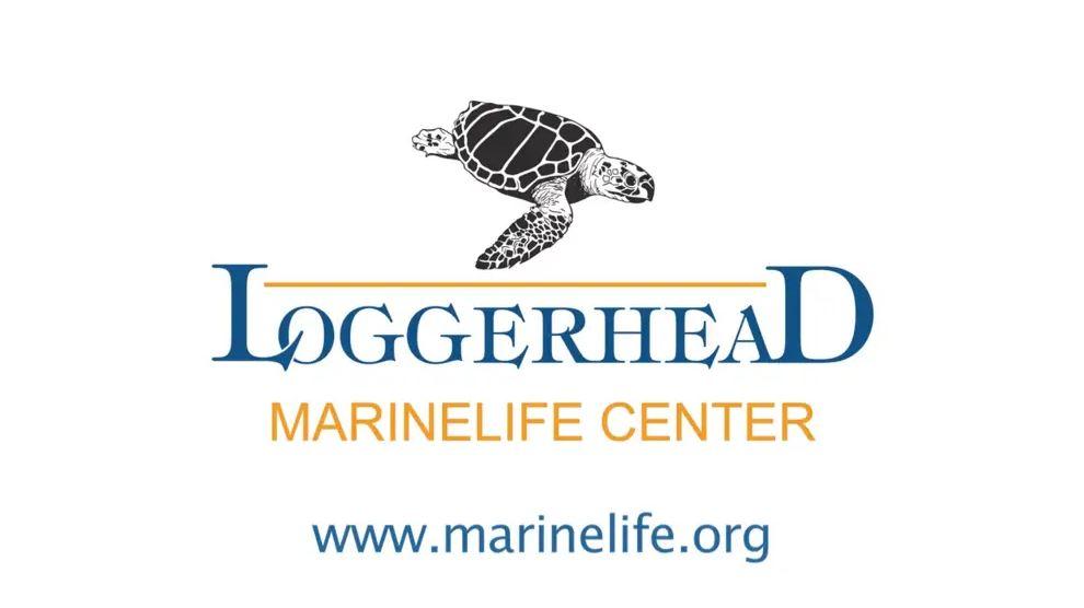 loggerhead logo.jpg