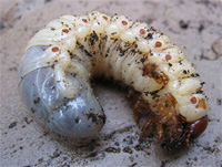 Zum Artikel: Insekten und Co. - Tierische Notnahrung