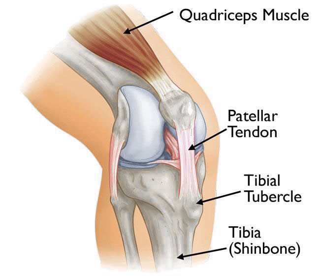 knee-anatomy-1.jpg