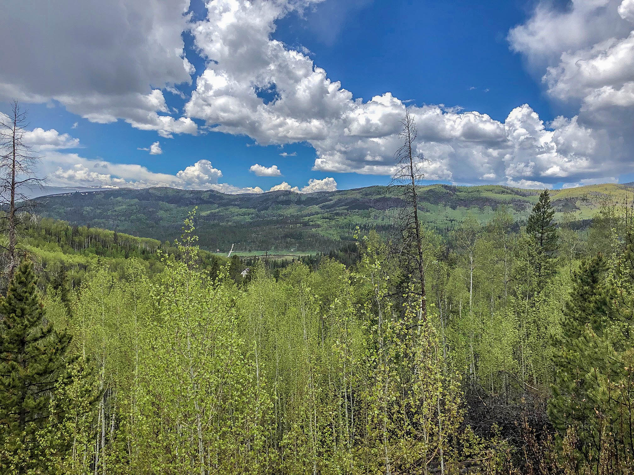 83 & 125 County Road 414 - GRAND LAKE - Lovely mix of aspen and pines on this nearly 3 acre parcel. Huge mountain views, year round access and very close to public lands. Amazing water sport recreation is just minutes away too on Lake Granby, Shadow Mountain and Grand Lake. Listed for $119,000
