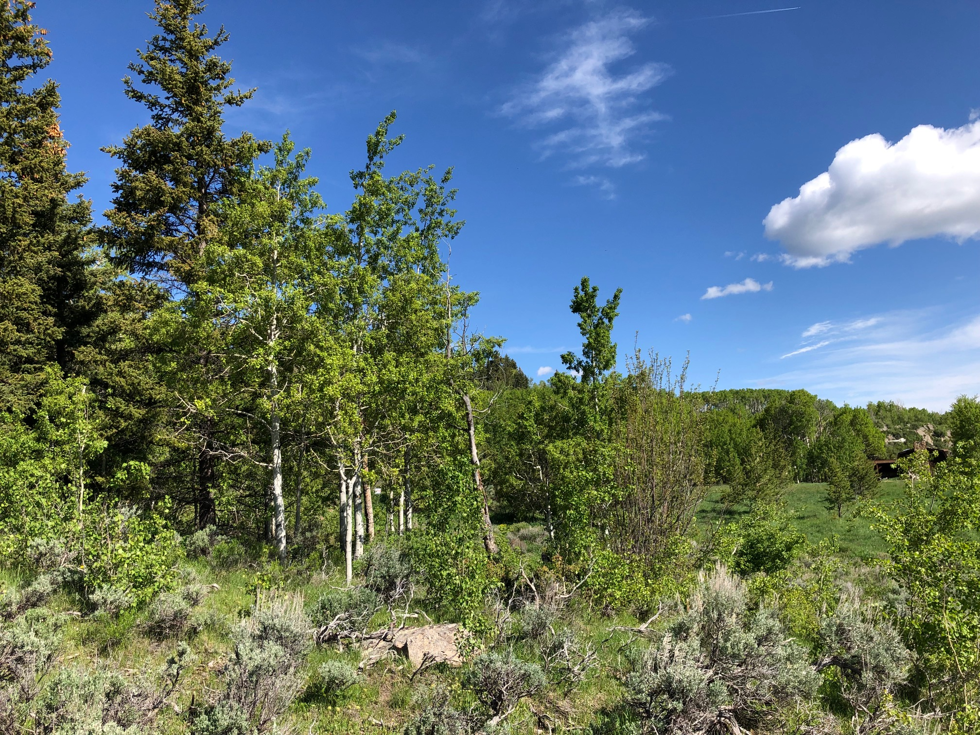 1572 County Road 162 - Lovely 5+ acre mountain property with a creek, trees and a beaver pond. Don't miss the amazing views of the Continental Divide to the east. Roads are accessible year round and County maintained. This property is just minutes from National Forest access. Listed for $65,000