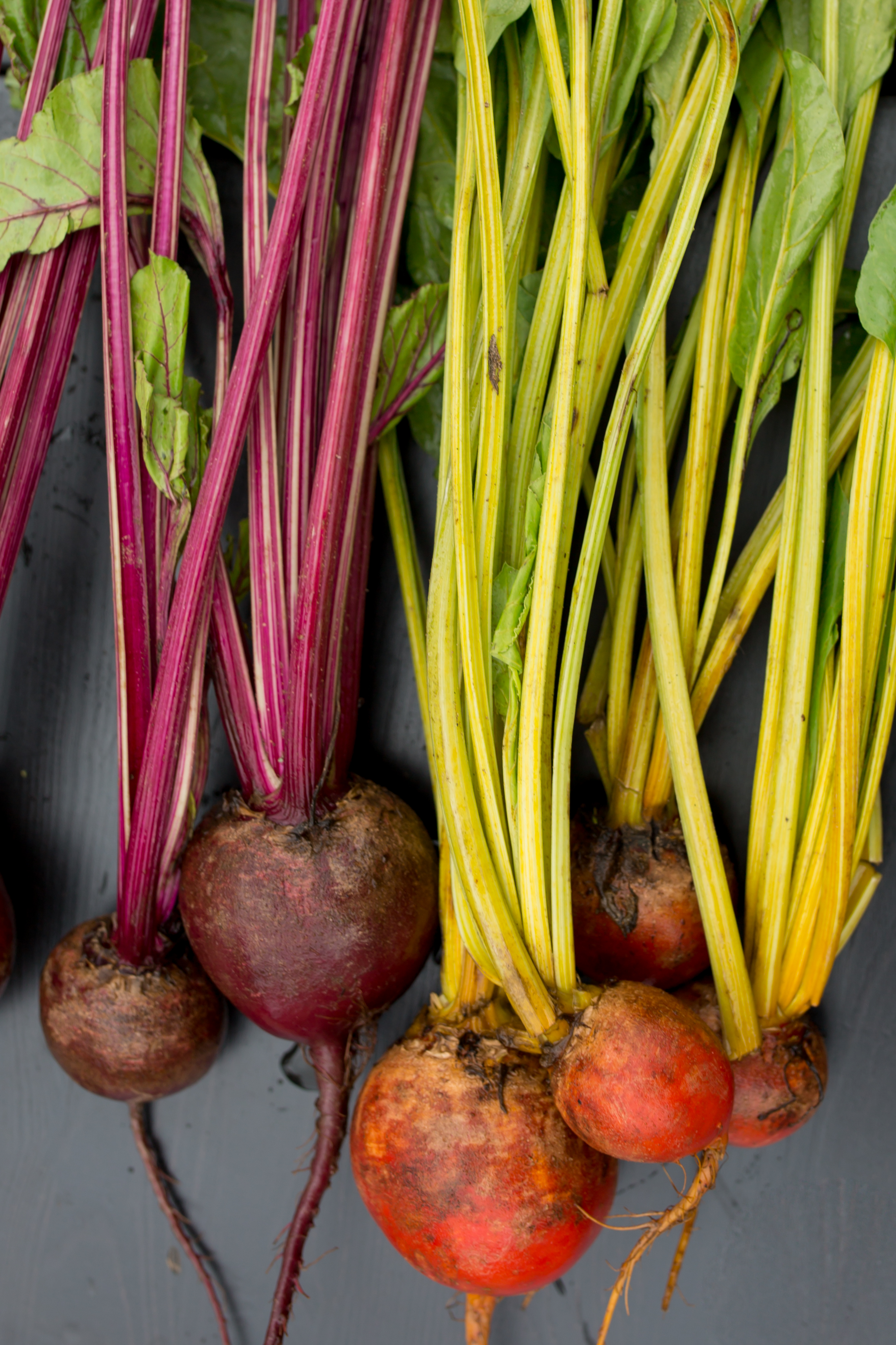 When Buying - Choose firm bulbs with smooth skin and crisp, fresh stalks and dark green leafy tops.