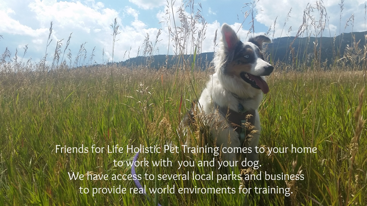 Training in real parks and local businesses provides unique situations for distractions. Dogs with reactive behaviors, leash pulling, and aggression will have the opportunity to use new skills with the watchful, support of our trainers.
