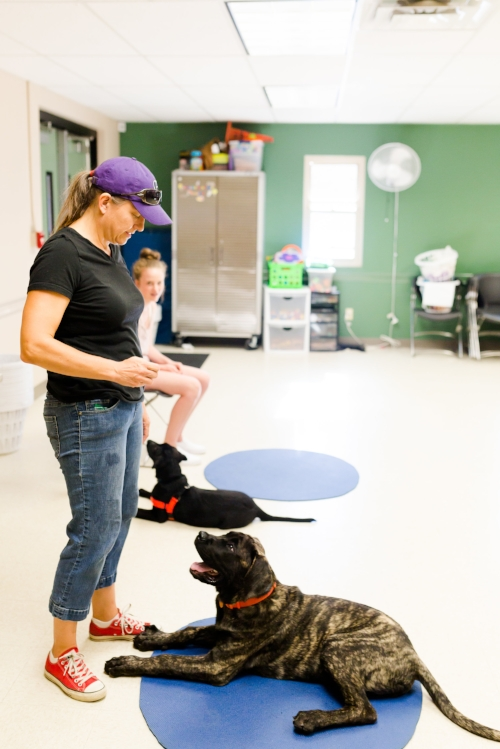 Fun games and calming exercises help teach impulse control to a growing puppy. No Force No Fear No Pain.