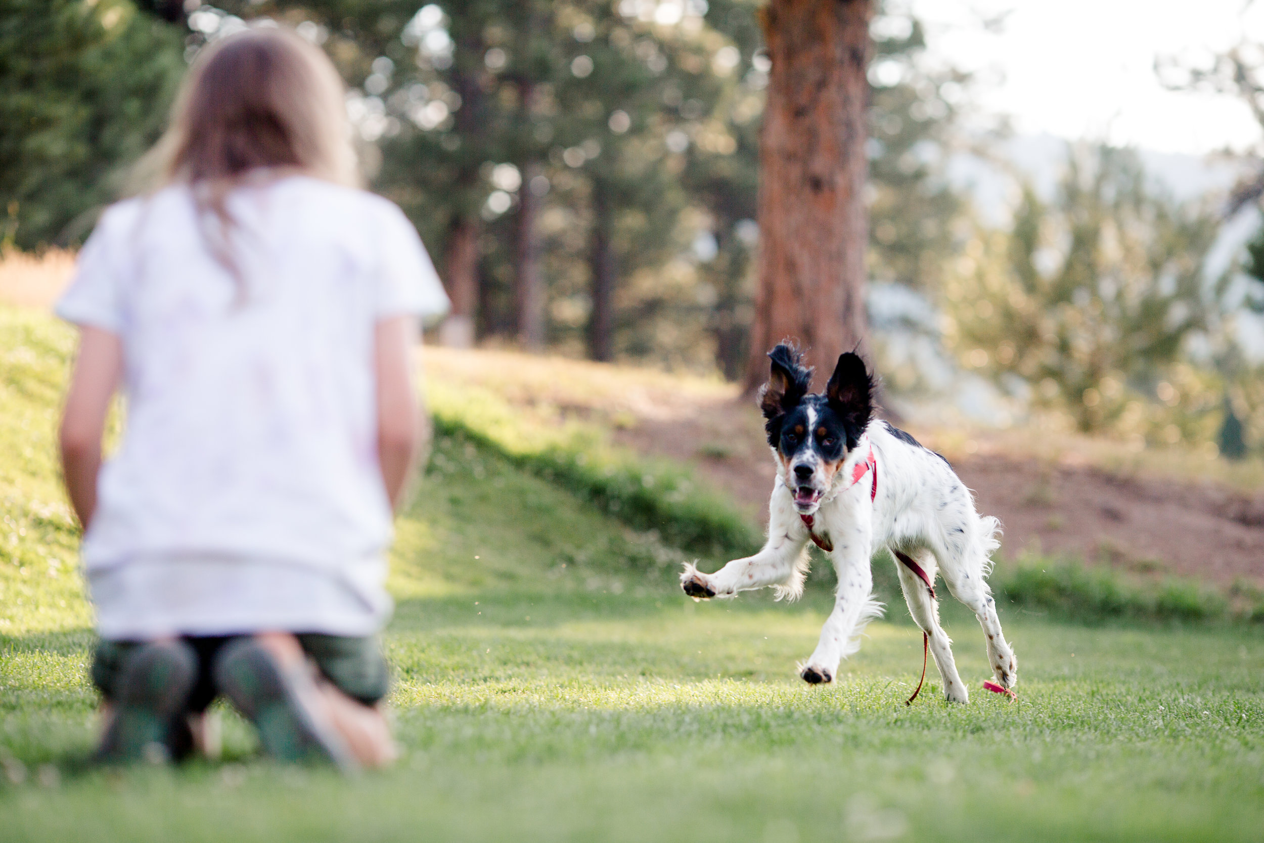 Group Dog Obedience Classes provide lessons in basic cues, manners and loose leash walking.