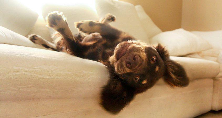 Choosing-the-best-home-boarding-host-for-your-dog.jpg