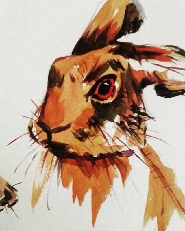Rabbit  #watercolor#illustration#animals