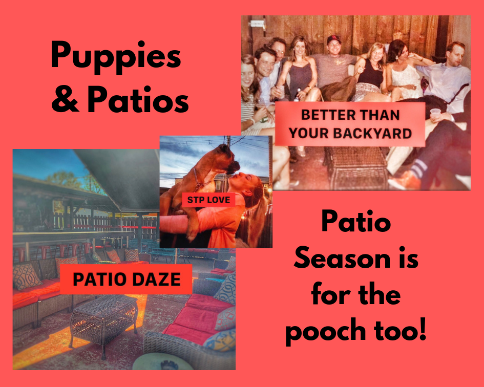 Patio Daze.png