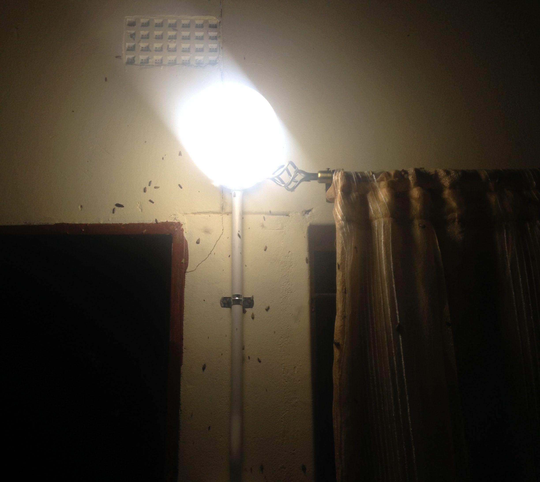 Embambala.Bugs gone  berserk .
