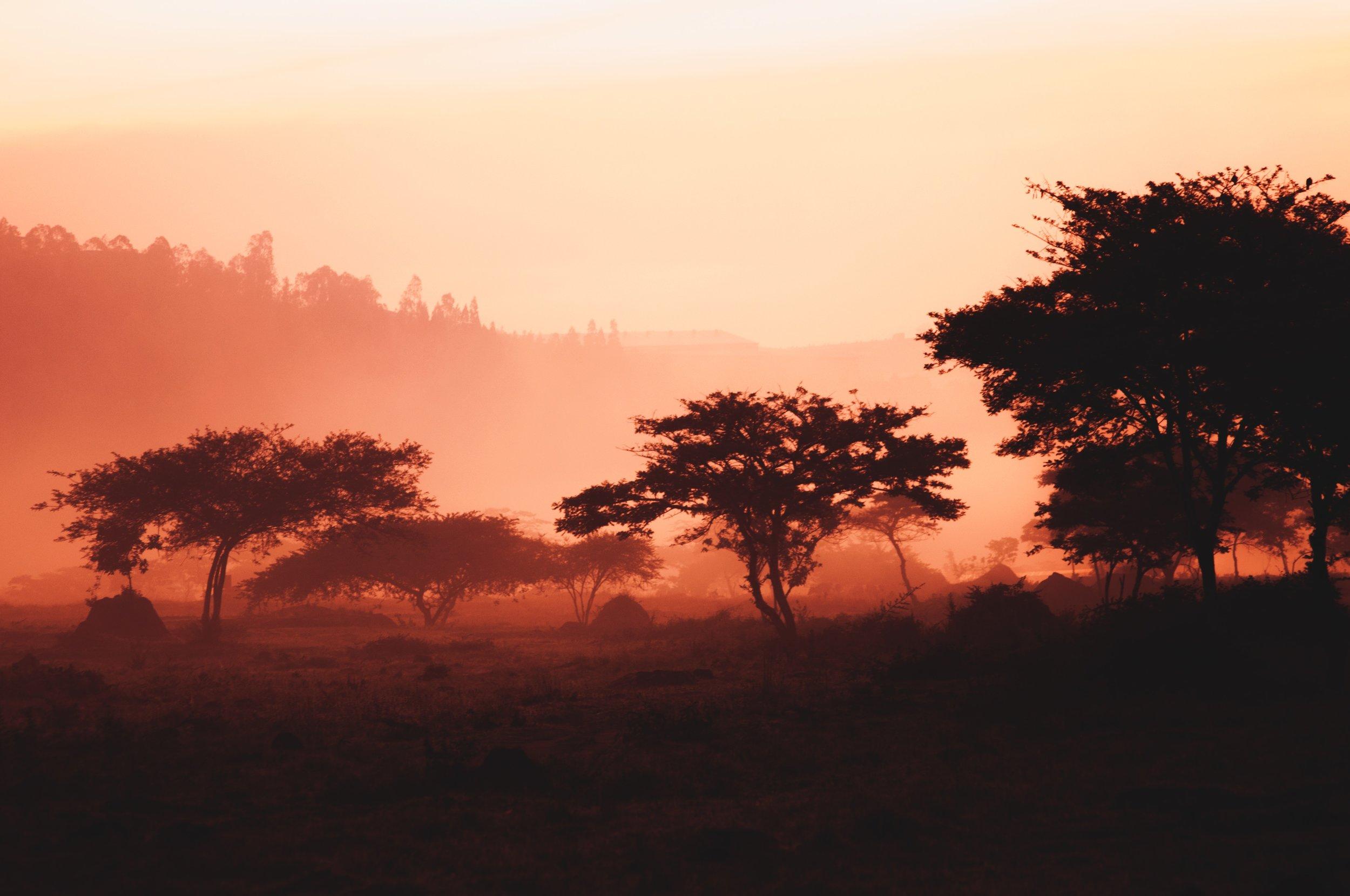 RWANDA-unsplash.jpg