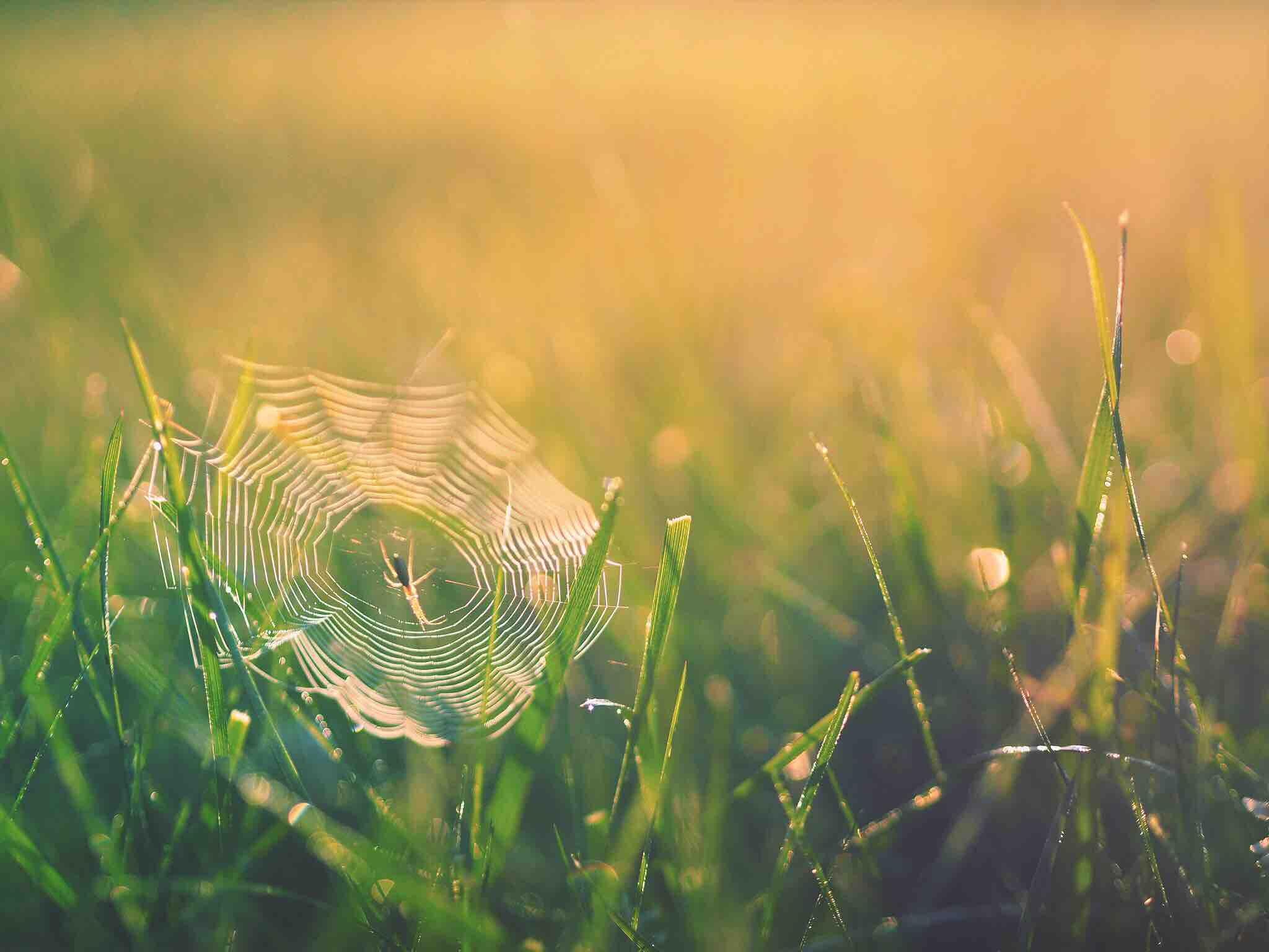 SPIDERWEB-unsplash.jpg