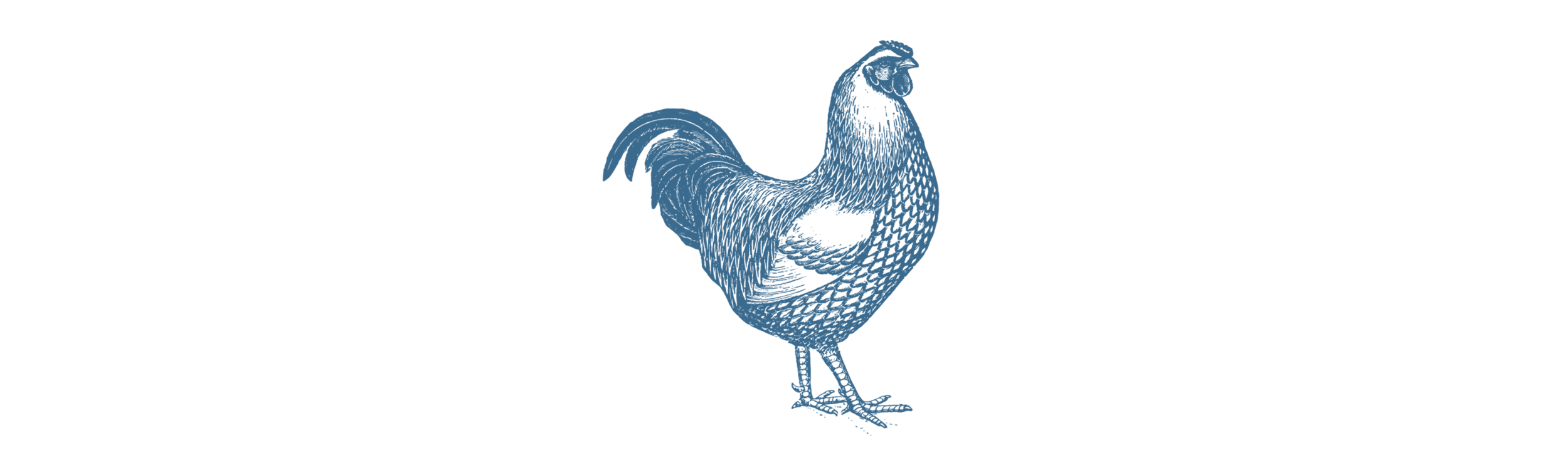 Chicken_Transparent copy+wide.png
