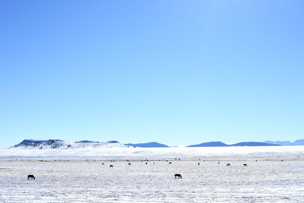 Colorado_Horses_Landscape_Mountains.jpg