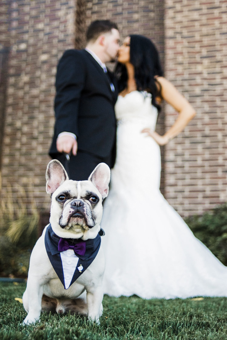 Colorado_Wedding_Photographer_Apollo_Fields_Dog.jpg