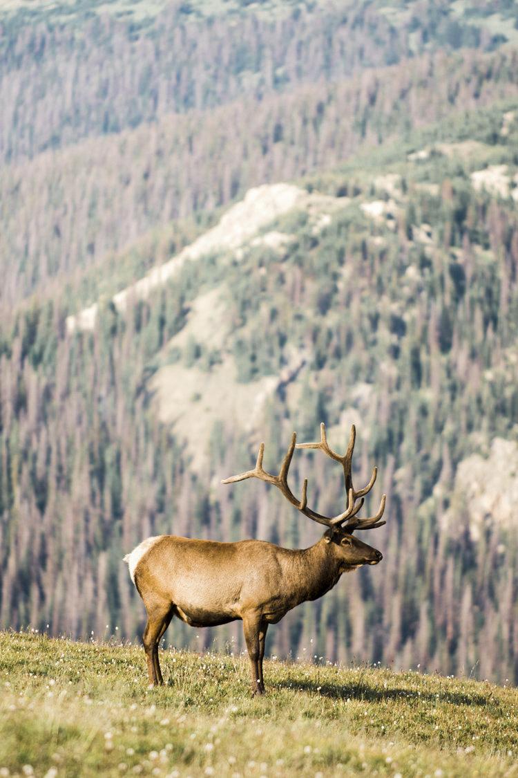 Colorado_Wedding_Photographer_Apollo_Fields_Elk.jpg