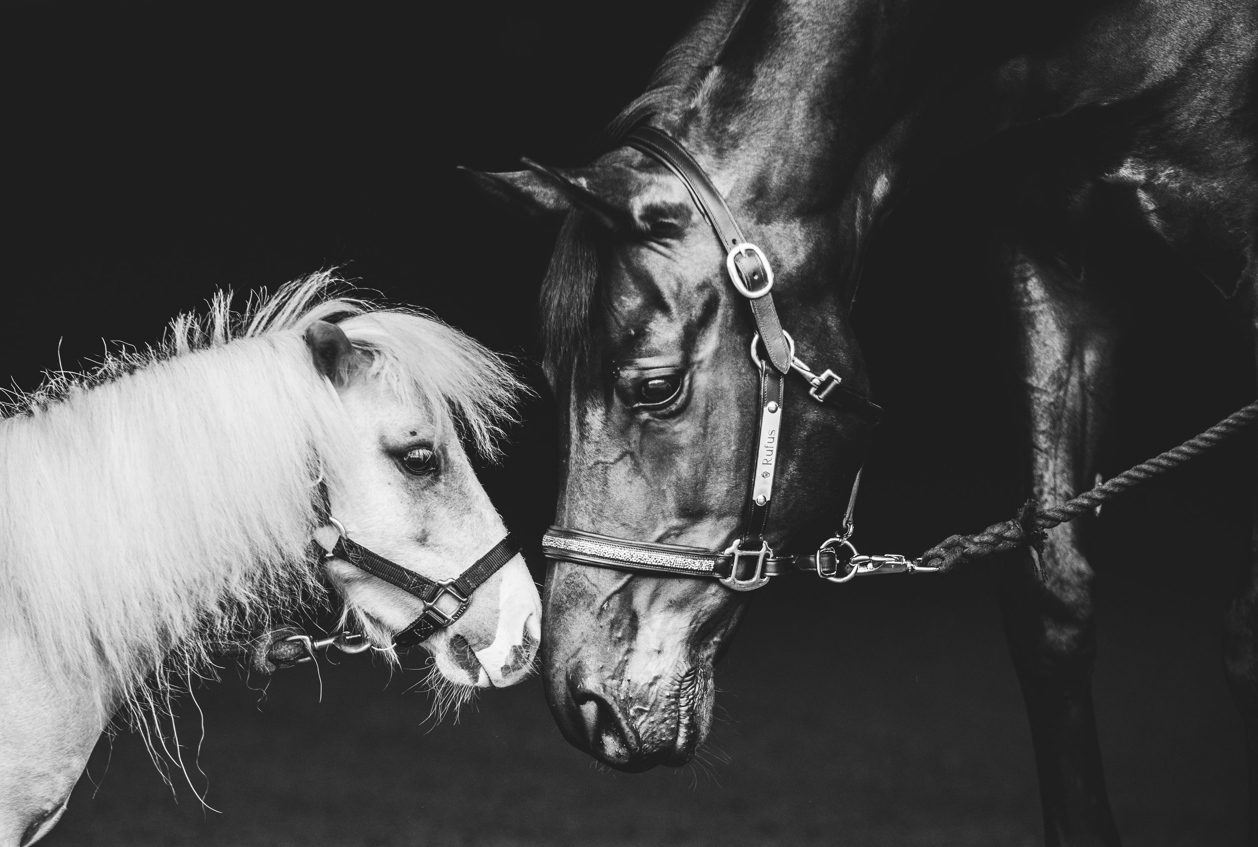 Horse_Photography_Portraits_Equine_Photographer_-2.jpg