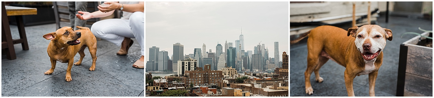Brooklyn-Engagement-Session-Apollo-Fields-NYC-Skyline-21.jpg