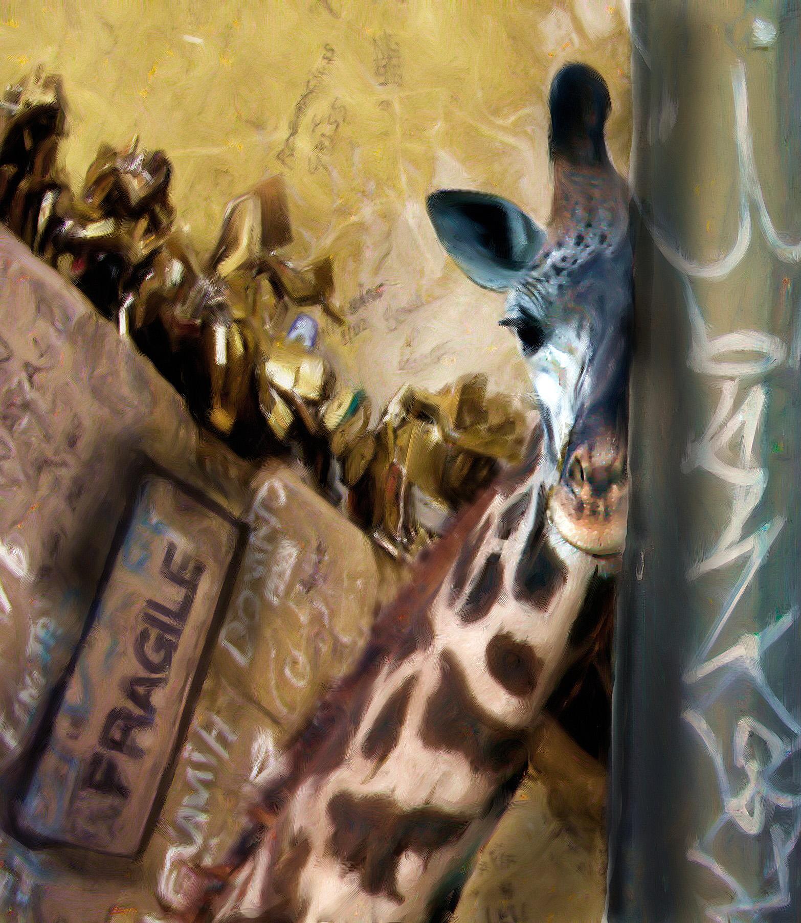 Fonda Haight - giraffe leaning.jpg