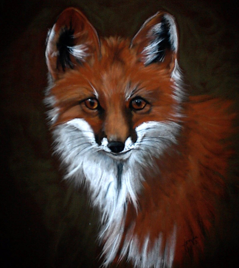Fonda Haight - mountain laurel fox_edited-1.jpg