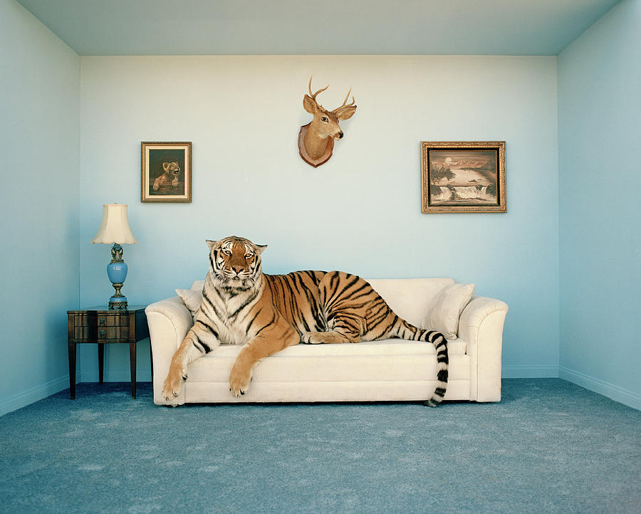 Tiger on the sofa.jpg