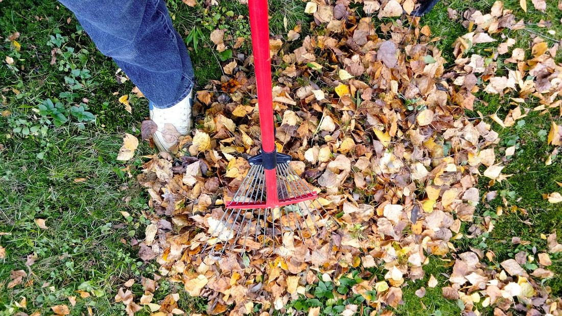 raking leaves blog