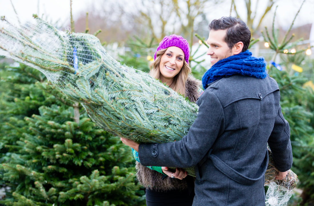 christmas tree pests