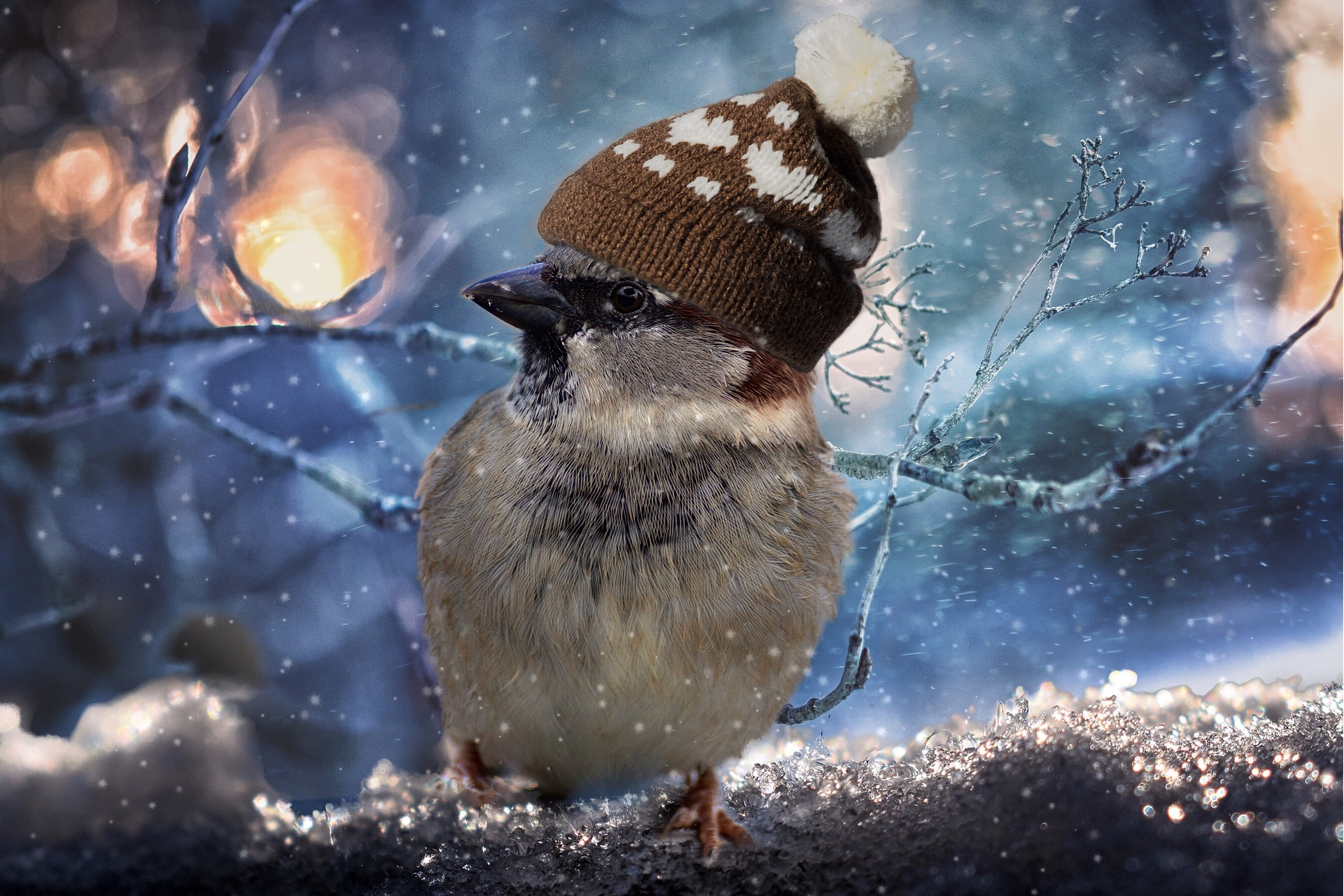 sparrow-2909335_1920.jpg