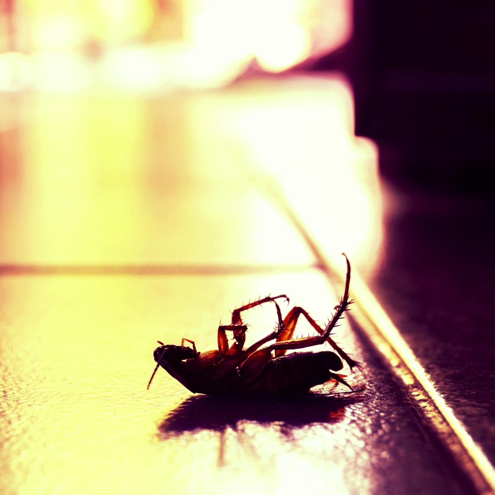 pest-control-rid-eliminate-bugs