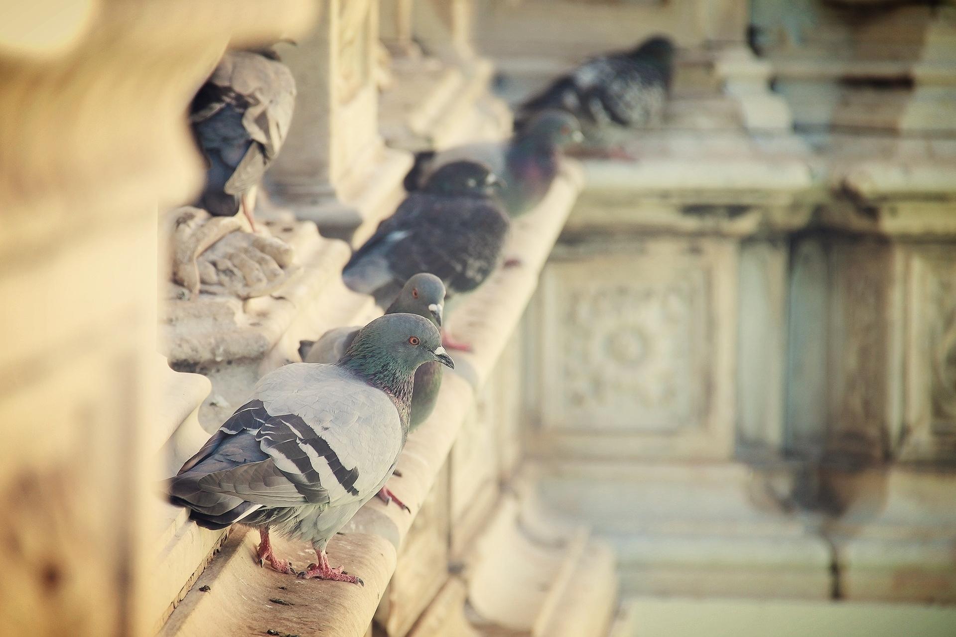 bird-control-gladhill-services