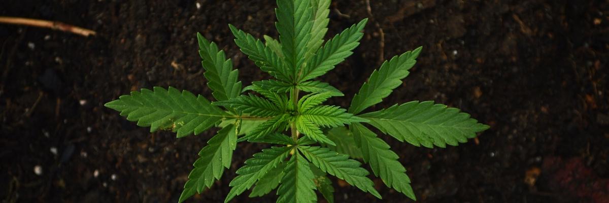 banking marijuana related business.jpg