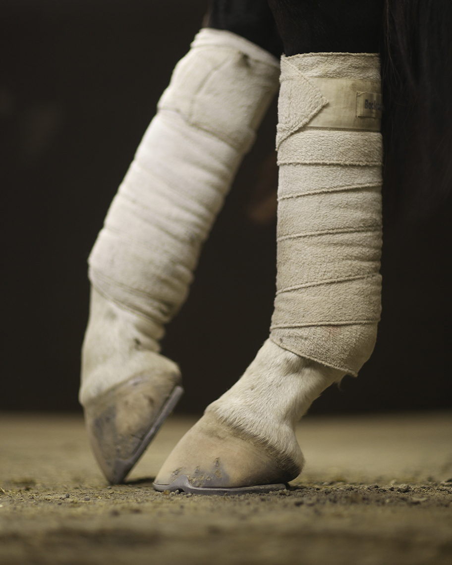 wrappedhorseslegs shaunsullivan for Poppy Creative Agency.jpg