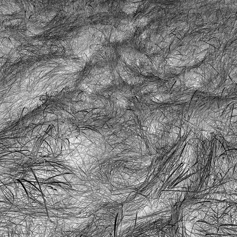 Grass Tracks 52