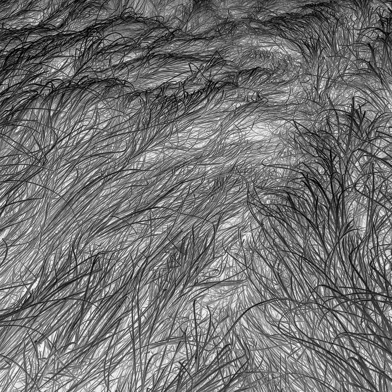 Grass Tracks 50