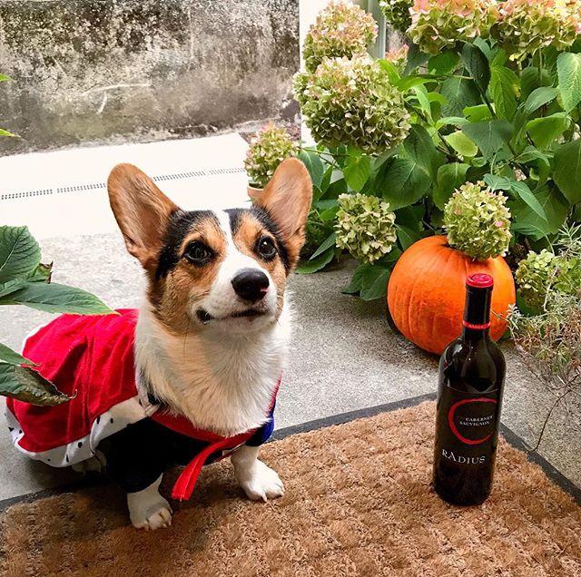Happy Halloween everyone! Hope you all have a spooky night filled with treats 🎃 👻 - - - - 📷: @dvmajewski  #radiuswine #wine #halloween #spooky #trickortreat #vinetobottle #washingtonwine #welcometowashington #winetime #winewednesday #cheers #october #fall #autumn