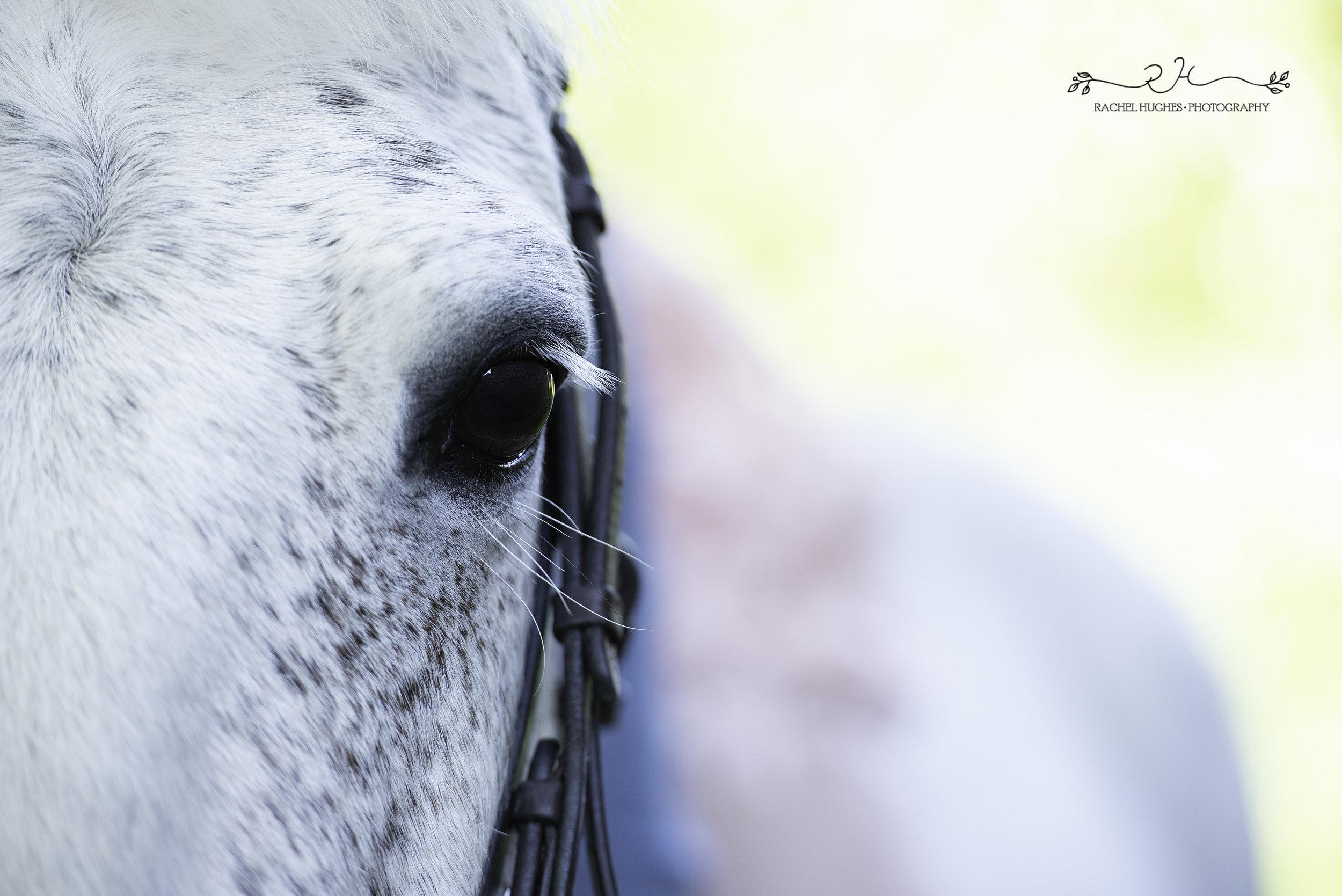 Jersey photographer - horse eye portrait