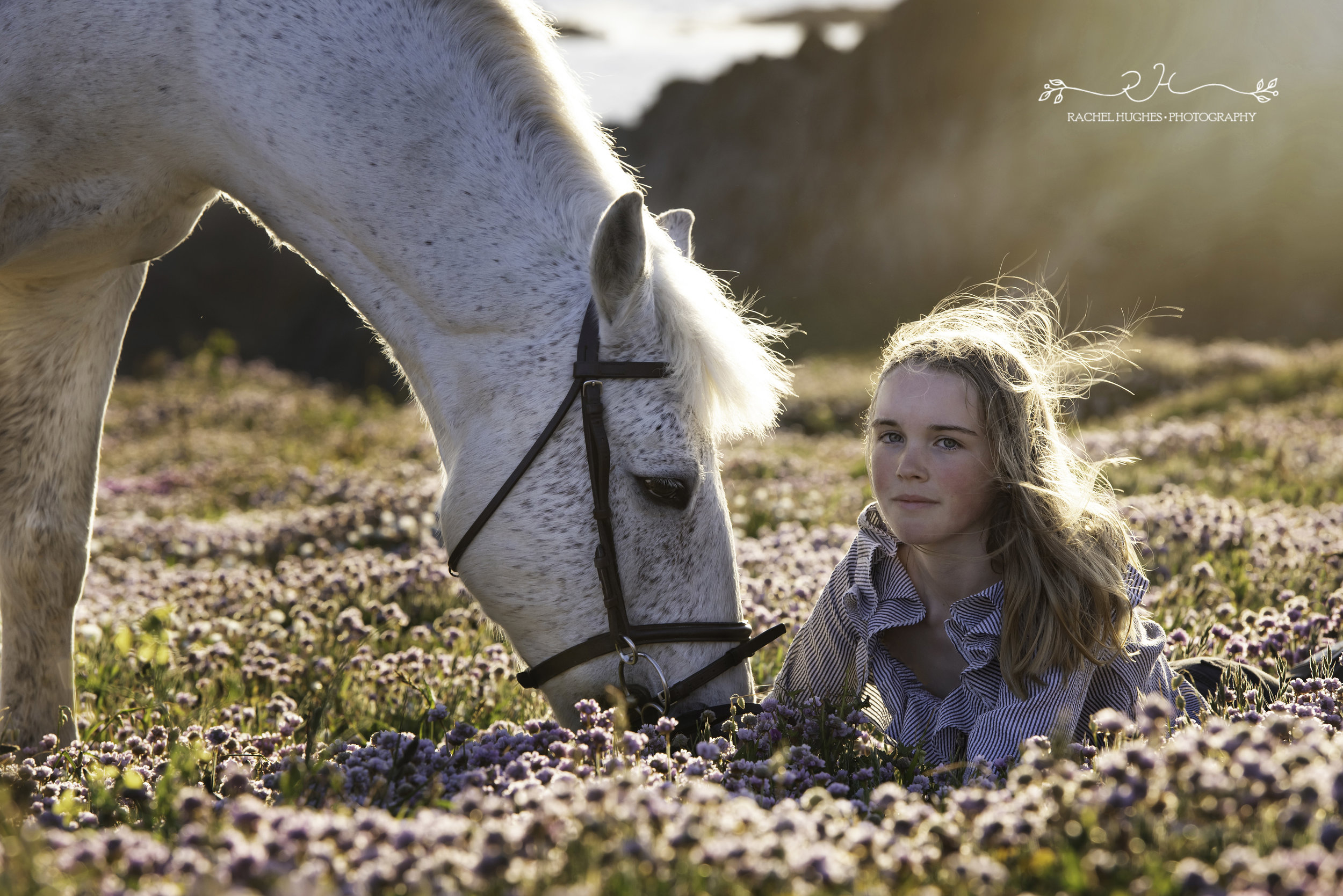 Jersey photographer - girl and horse amongst sea pinks