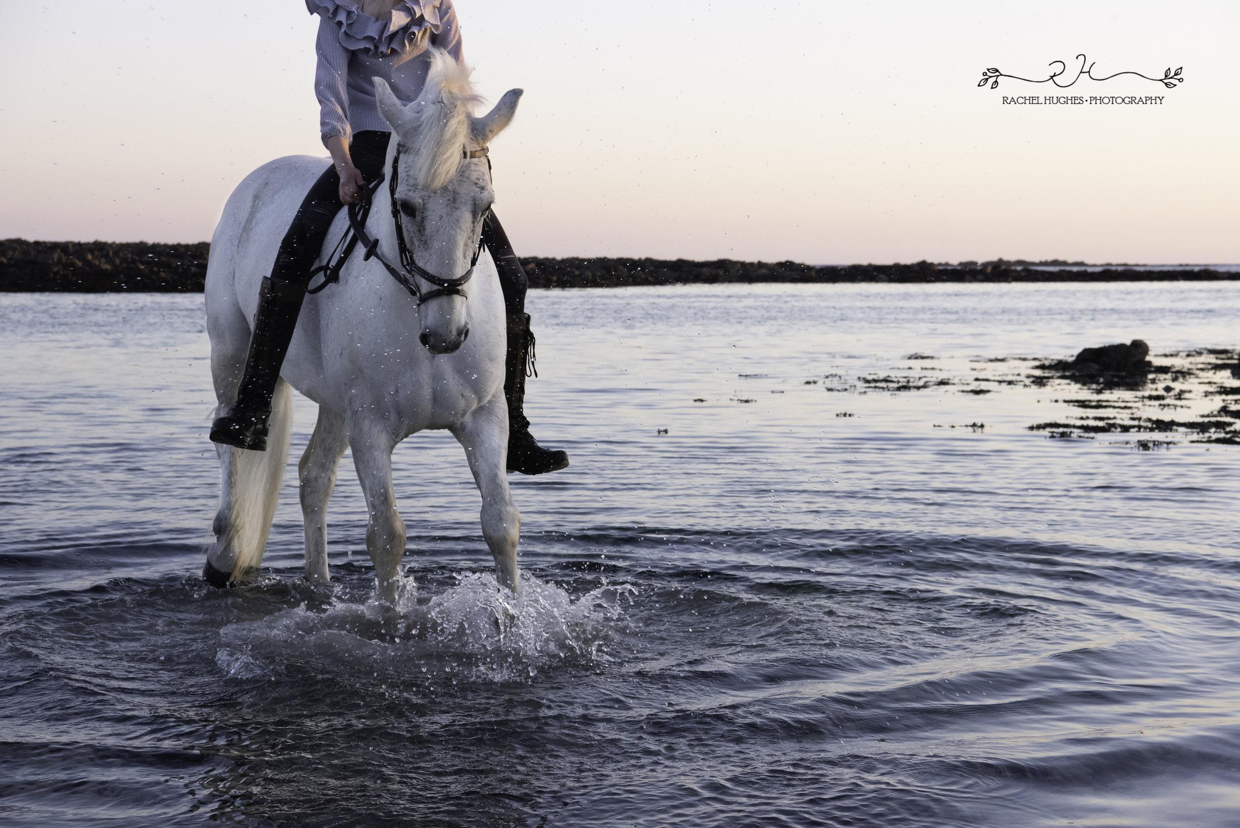 Jersey photographer - horse splashing in sea
