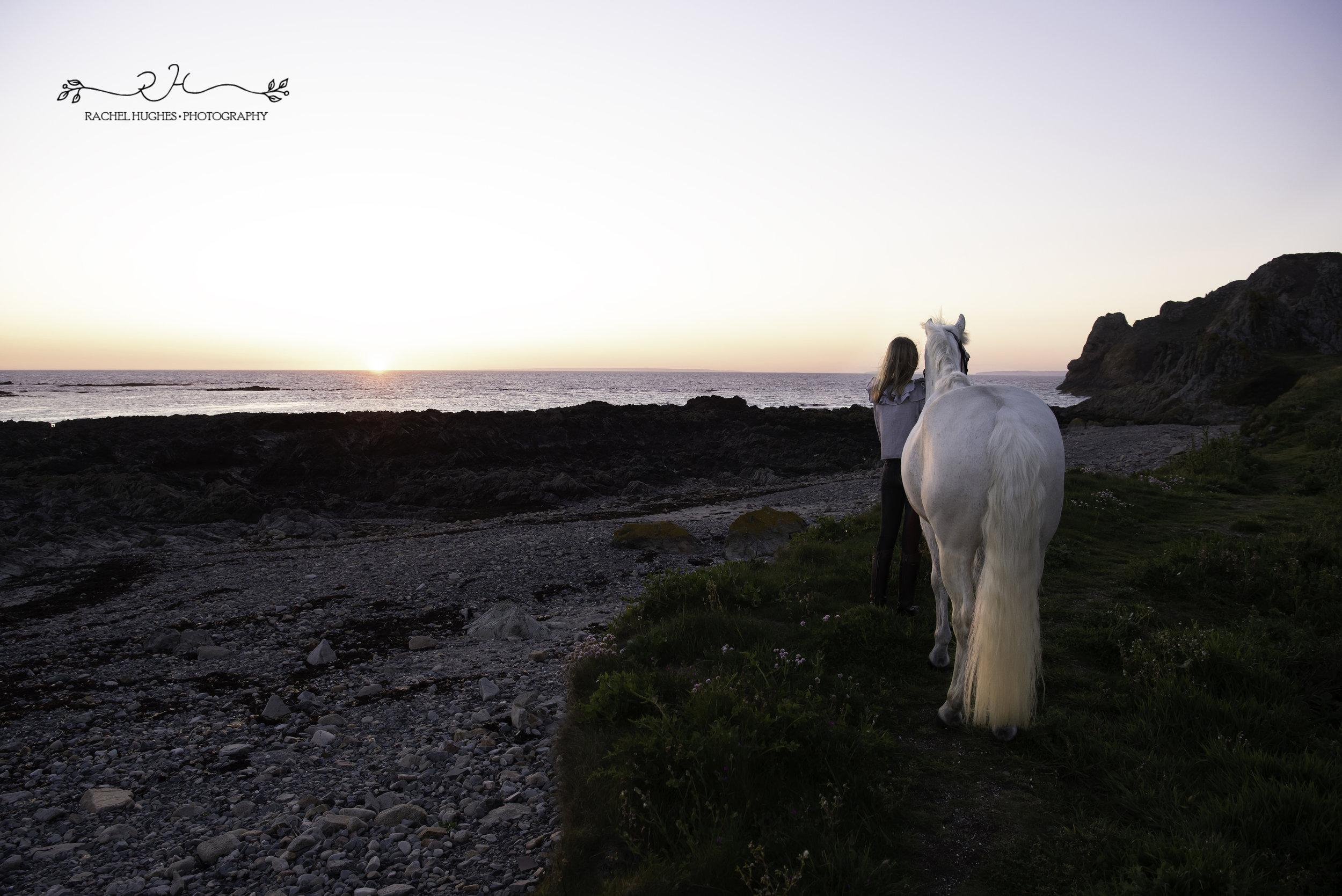 Jersey photographer - beautiful white horse at sunset