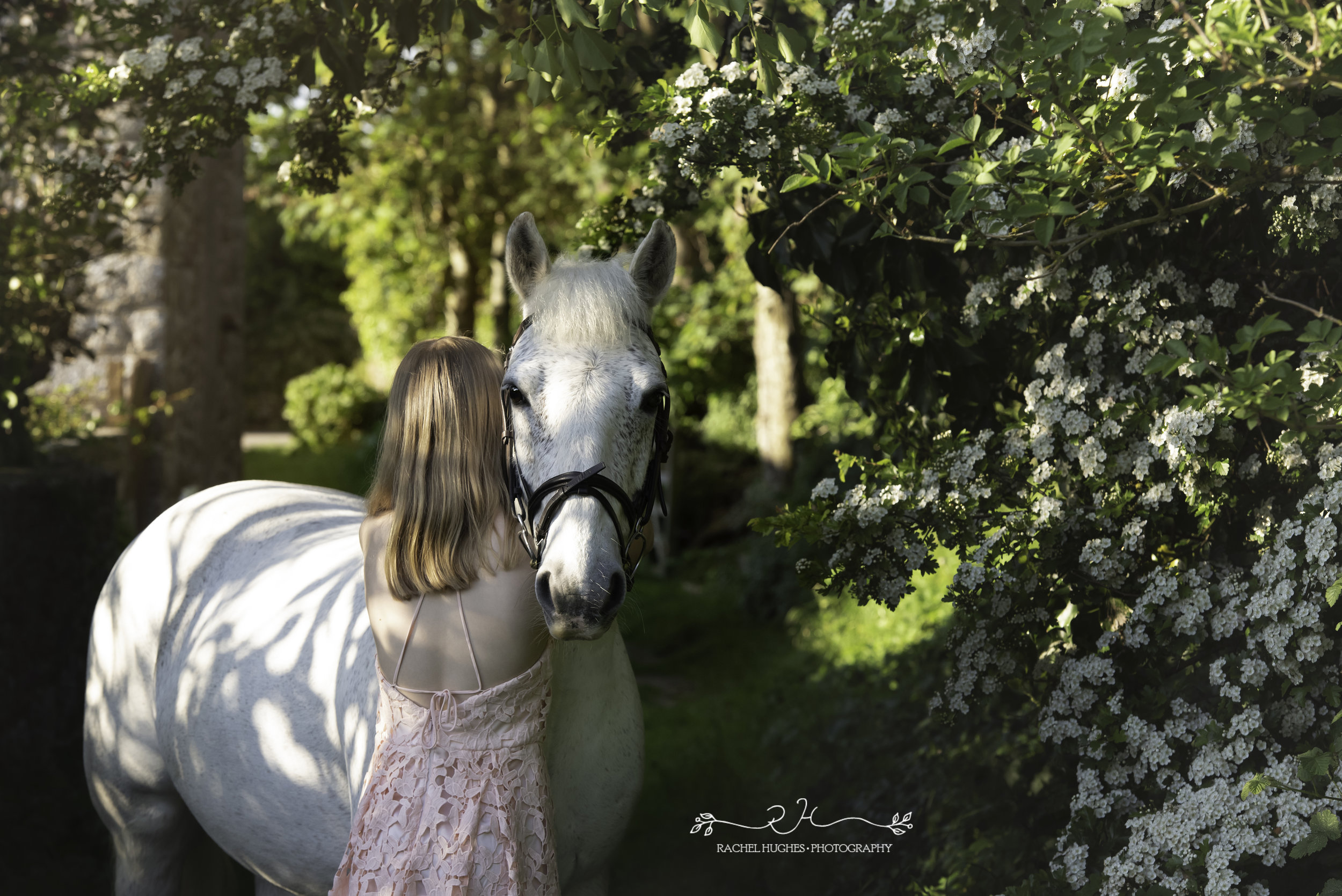 Jersey photographer - girl in lace dress with white horse