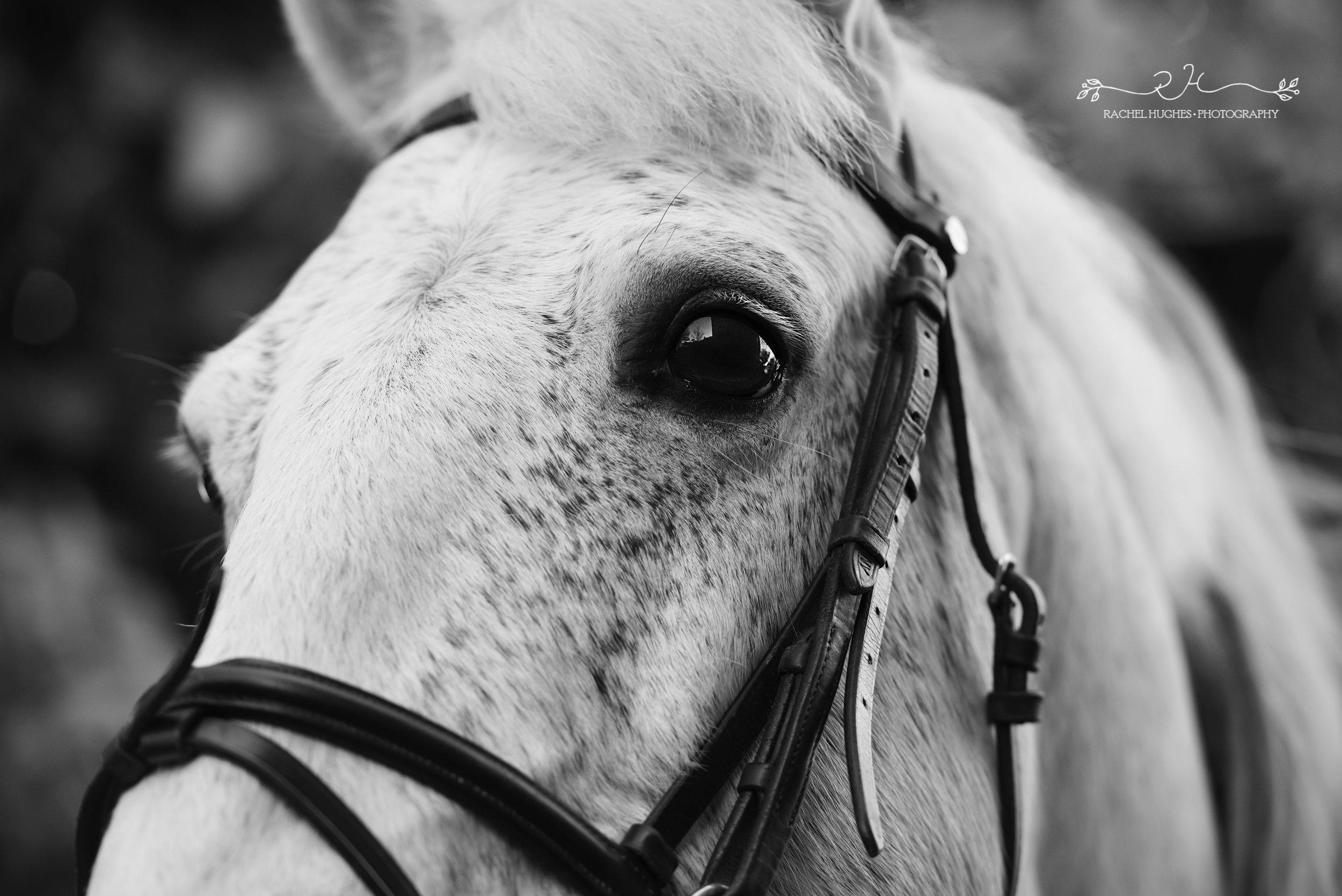Jersey photographer - close up of horse eye