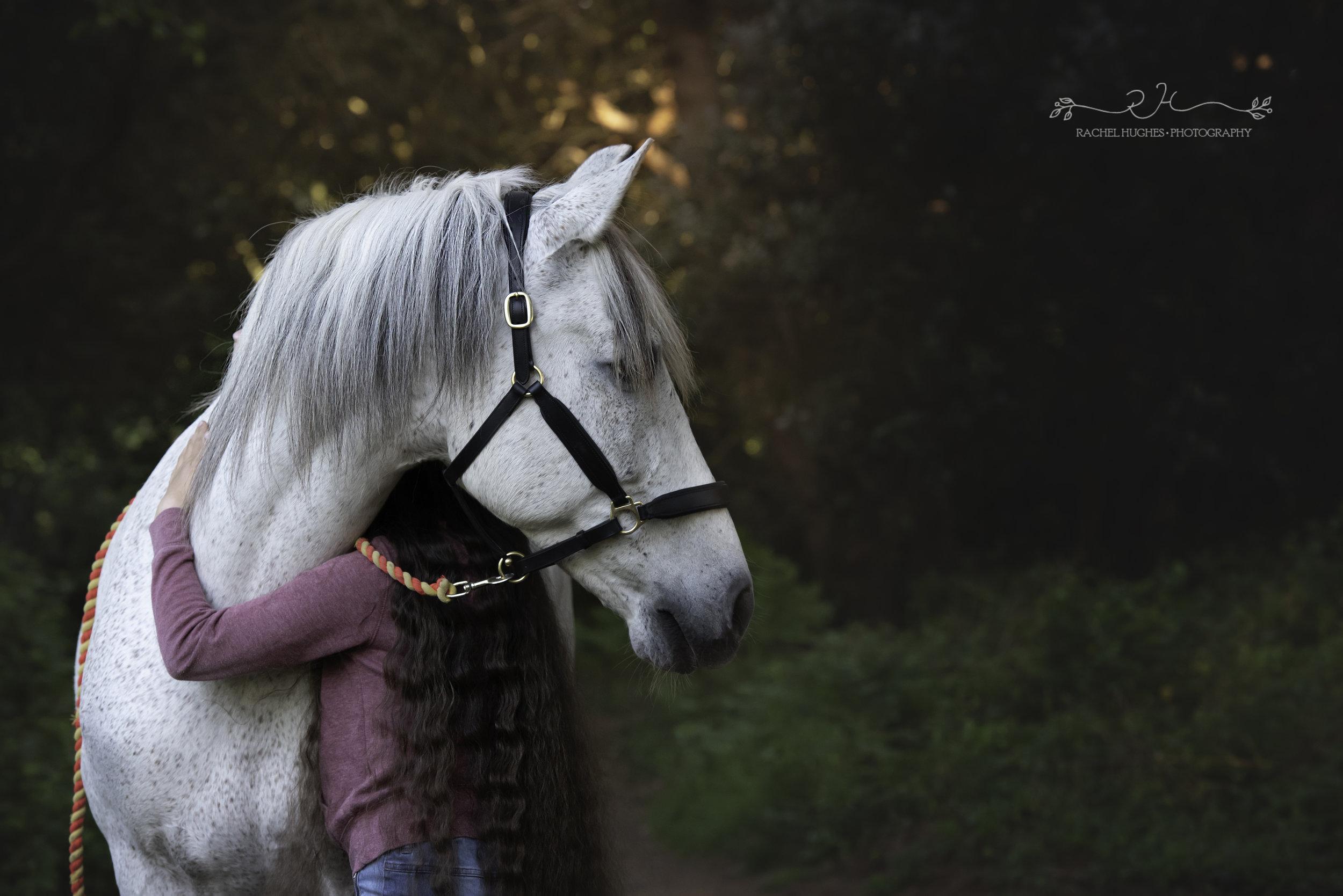 Jersey photographer  - rescue horse photoshoot