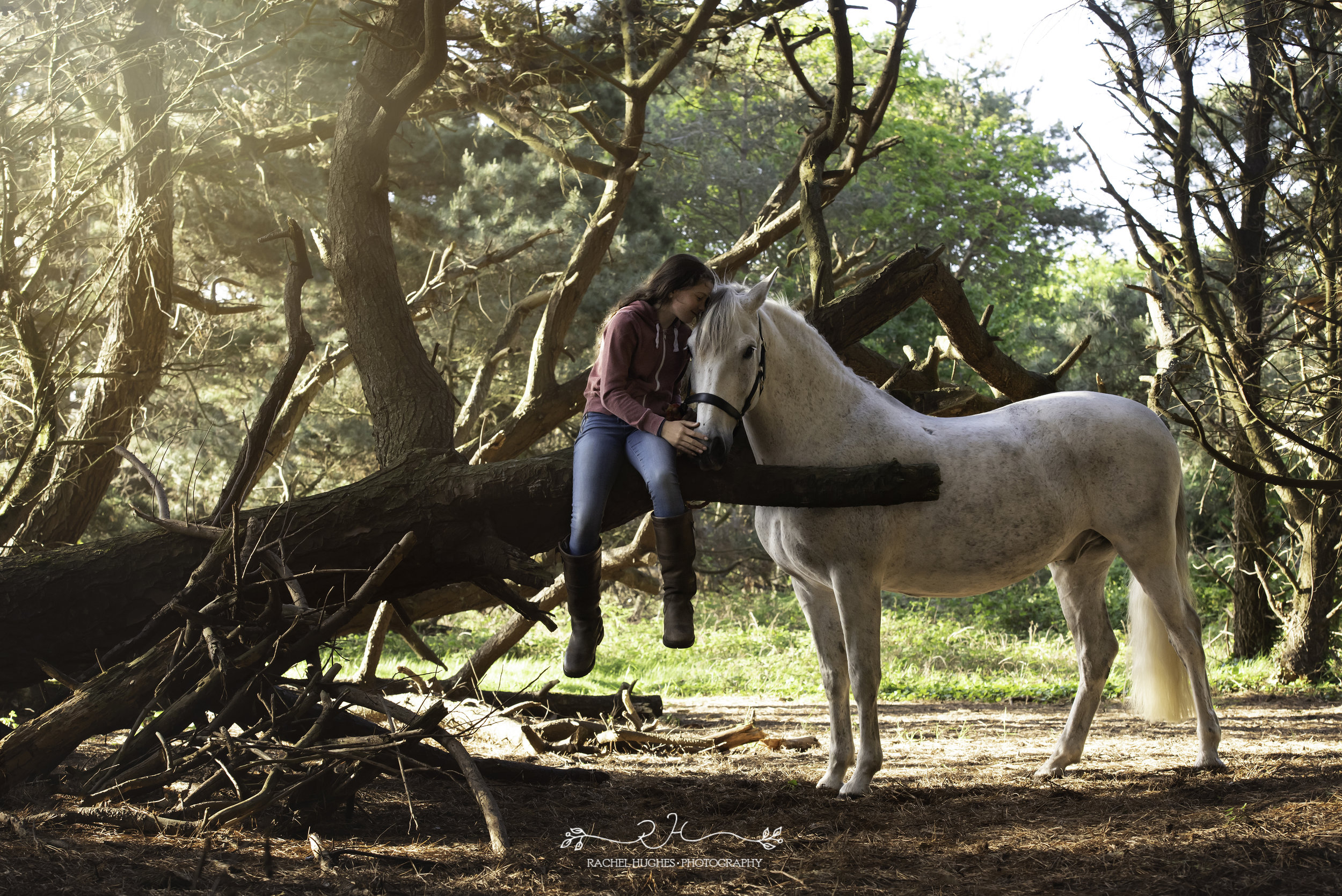 Jersey photographer - rescue horse and girl in forest