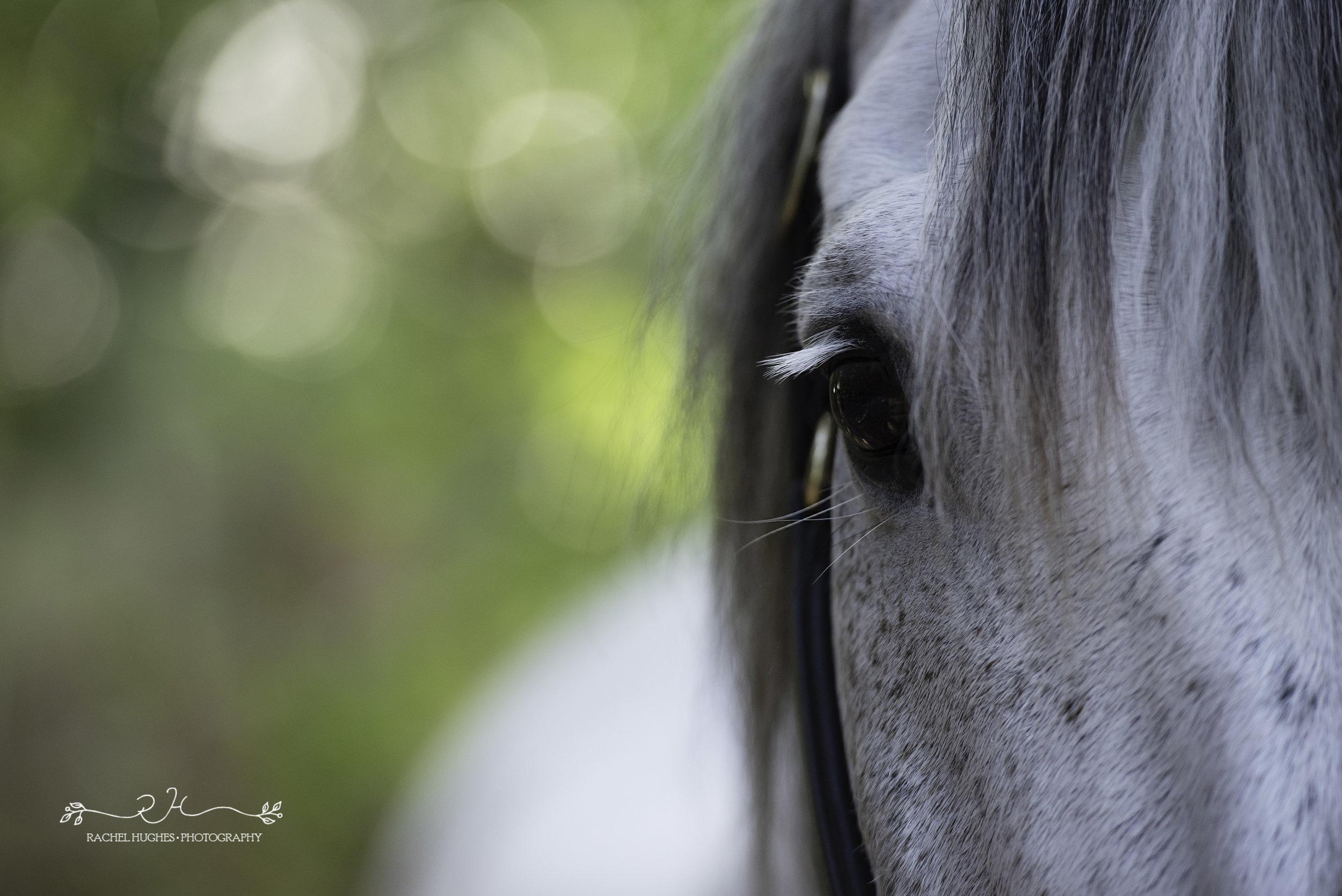 Jersey photographer - portrait of rescue horse